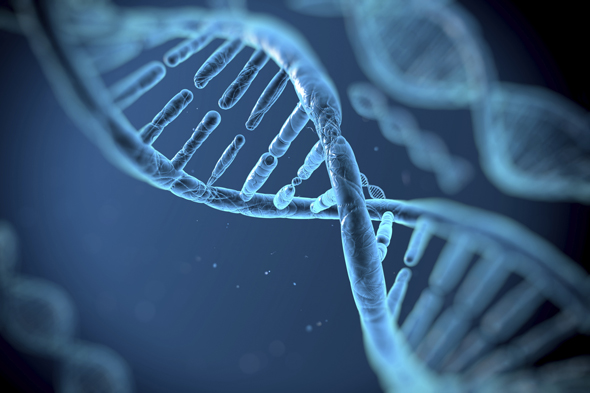 DNA molecole